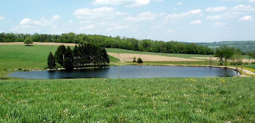Fish management in ny ponds pond habitat assessment for Pond depth for fish